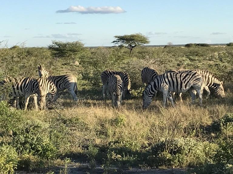 Zebras no Etosha Park (Viagem fotográfica pela Namíbia por Carioca NoMundo)