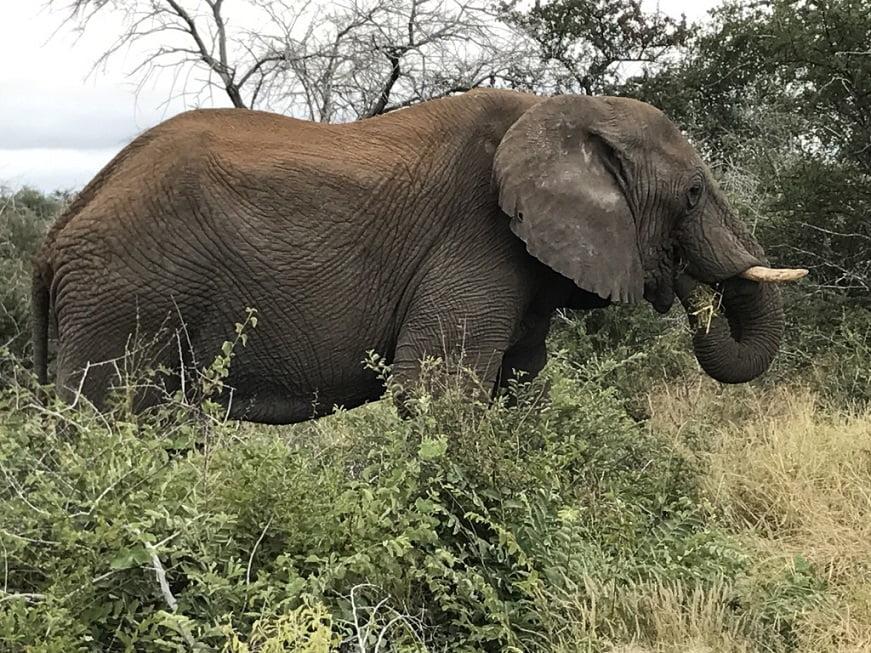 Elefante no Etosha Park (Viagem fotográfica pela Namíbia por Carioca NoMundo)