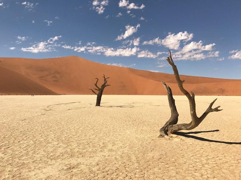 Troncos de acácias mortas há 800 anos em Deadvlei, uma bacia de argila branca na região de Sossusvlei (Turismo na Namíbia por Carioca NoMundo)