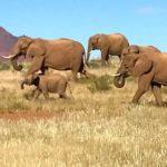 Manada de elefantes em Damaraland, Namíbia, por Carioca NoMundo