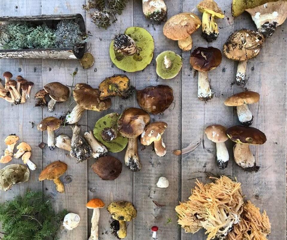 Hora de fazer as reservas para o Noma 2.0: cogumelos selvagens da Noruega que surgiram na pesquisa da equipe do chef René Redzepi