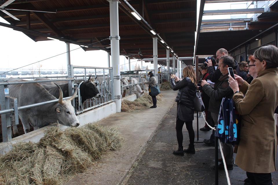 Animais na mini fazenda do Eataly World: todas as fases de produção podem ser conhecidas