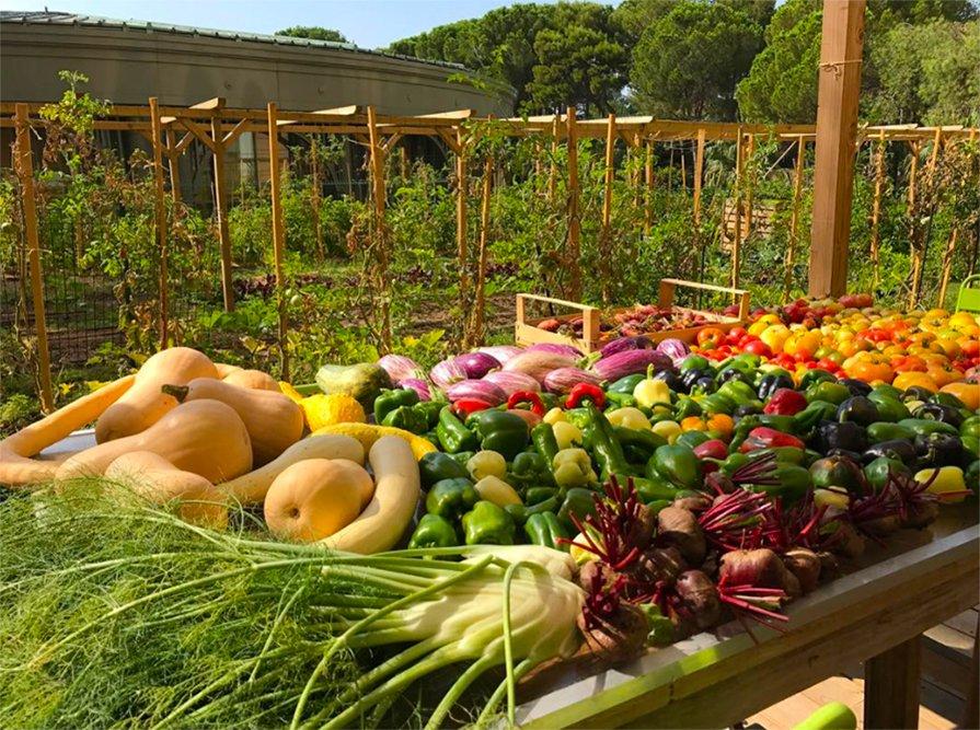 Produtos da horta orgânica Terre de Mônaco